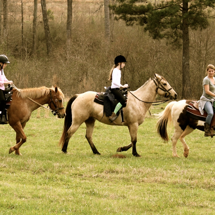 Horse Around: Trail Ride and Picnic
